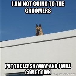 Roof Dog - I am not going to the Groomers Put the leash away and I will come down