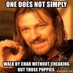 ODN - One does not simply  walk by char without cheaking out those puppies.