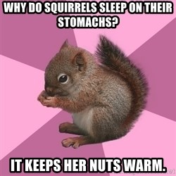 Shipper Squirrel - Why do squirrels sleep on their stomachs? It keeps her nuts warm.