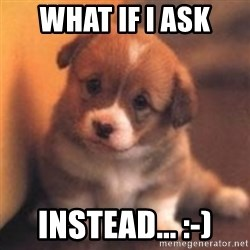 cute puppy - What if I ask instead... :-)