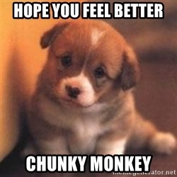 cute puppy - Hope you feel better Chunky monkey