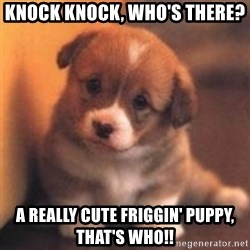 cute puppy - Knock knock, who's there? A really cute friggin' puppy, that's who!!