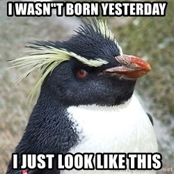 "So What Penguin - I WASN""T BORN YESTERDAY I JUST LOOK LIKE THIS"