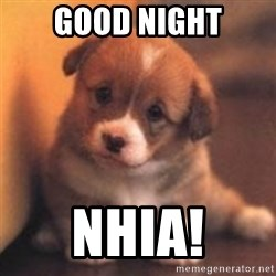 cute puppy - Good night Nhia!