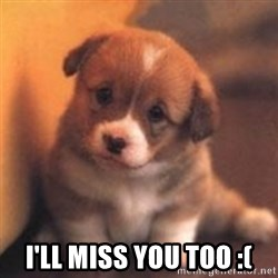 cute puppy -  I'LL MISS YOU TOO :(