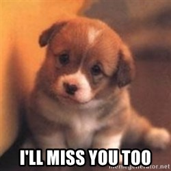 cute puppy -  I'LL MISS YOU TOO