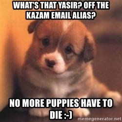 cute puppy - What's that Yasir? Off the Kazam email alias? No more puppies have to die :-)