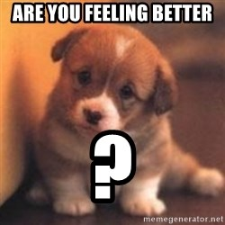 cute puppy - Are you feeling better  ?