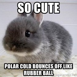 ADHD Bunny - So cute Polar cold bounces off like rubber ball
