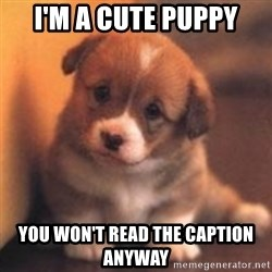 cute puppy - I'm a cute puppy You won't read the caption anyway
