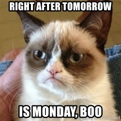not funny cat - right after tomorrow is monday, boo