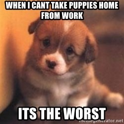 cute puppy - when i cant take puppies home from work its the worst