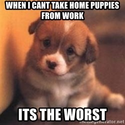 cute puppy - when i cant take home puppies from work its the worst