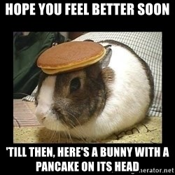 Bunny with Pancake on Head - Hope you feel better soon 'Till then, here's a bunny with a pancake on its head