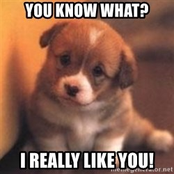 cute puppy - You know what? I really like you!