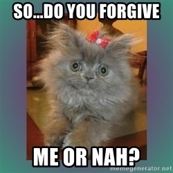 cute cat - so...do you forgive  me or nah?