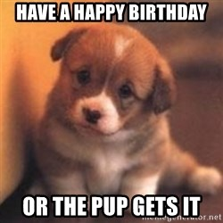 cute puppy - have a happy birthday or the pup gets it