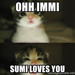 Adorable Kitten - Ohh Immi  Sumi Loves You