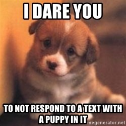 cute puppy - I dare you  To not respond to a text with a puppy in it