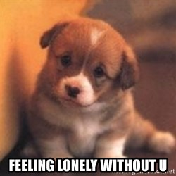 cute puppy -  Feeling Lonely Without U
