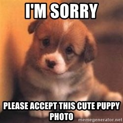 cute puppy - I'm sorry Please accept this cute puppy photo