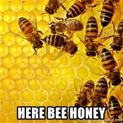 Honeybees -  Here bee honey