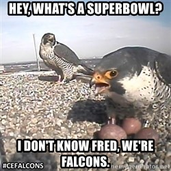 #CEFalcons - Hey, what's a superbowl? I don't know Fred, we're falcons.