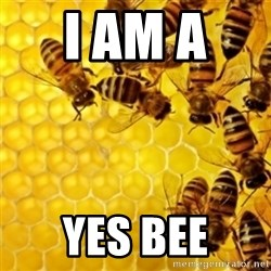 Honeybees - i am a  yes bee