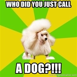 Pretentious Theatre Kid Poodle - WHO DID YOU JUST CALL A DOG?!!!