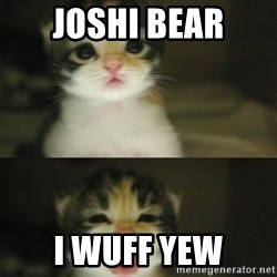 Adorable Kitten - Joshi bear i wuff yew