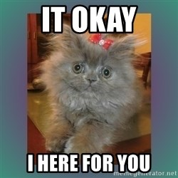 cute cat - IT OKAY I HERE FOR YOU