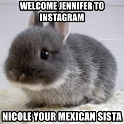 ADHD Bunny - Welcome Jennifer to Instagram Nicole your Mexican Sista