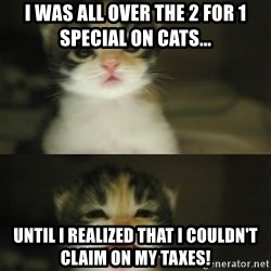 Adorable Kitten - I was all over the 2 for 1 special on cats... Until I realized that I couldn't claim on my taxes!