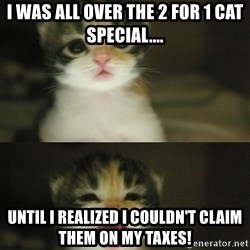 Adorable Kitten - I was all over the 2 for 1 cat special.... Until I realized I couldn't claim them on my taxes!