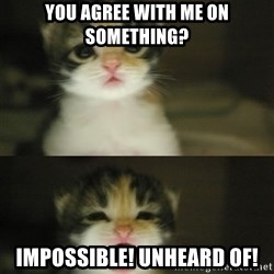 Adorable Kitten - you agree with me on something? impossible! unheard of!