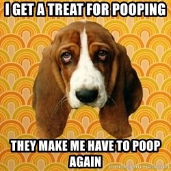 SAD DOG - I get a treat for pooping They make me have to poop again