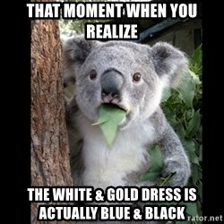 Koala can't believe it - that moment when you realize the white & gold dress is actually blue & black