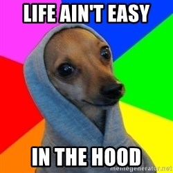 Good Guy Greg's dog - life ain't easy in the hood
