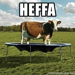 Unimpressionable Cow - HEFFA