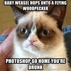 Grumpy Cat  - baby weasel hops onto a flying woodpecker photoshop go home you're drunk