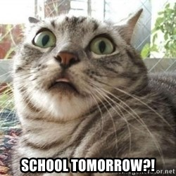 scared cat -  School Tomorrow?!