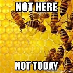 Honeybees - Not here Not today