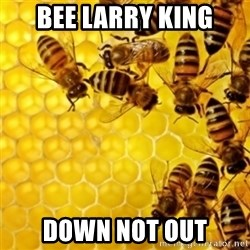 Honeybees - bee larry king down not out