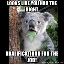 Koala can't believe it - Looks like you had the right koalifications for the job!