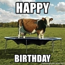 Unimpressionable Cow - Happy  Birthday