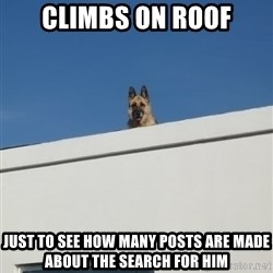 Roof Dog - climbs on roof just to see how many posts are made about the search for him