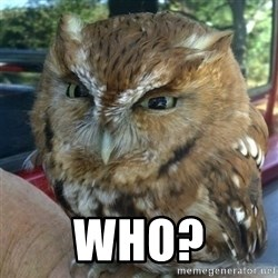 Overly Angry Owl -  Who?