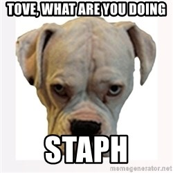 stahp guise - Tove, what are you doing Staph