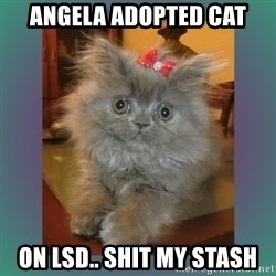 cute cat - Angela adopted cat On LSD.. Shit my stash
