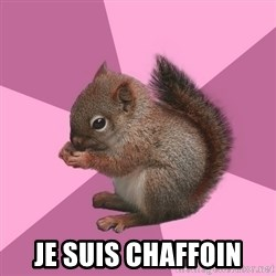 Shipper Squirrel -  Je suis chaffoin